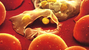Klímaváltozással terjednek észak felé a fertőző betegségek
