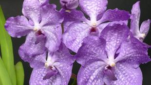 Pálinka és Orchidea a Vajdahunyadvárban
