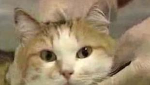 Hihetetlen körülmények közt élt túl egy macska egy kényszerleszállást