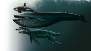 Hivatalosan is új fajként jegyezték be a nemrég felfedezett tengeri szörnyet