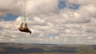 Megdöbbentő képek a repülő rinocéroszokról