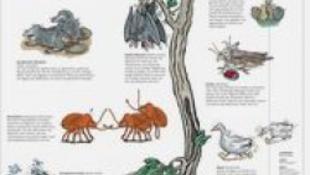 Káma Szútra állati módra