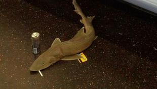 Cápa rejtőzött a metróban