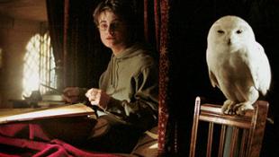 A Harry Potter-rajongók felelőtlen állattartók