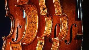 Stradivari és a gombák