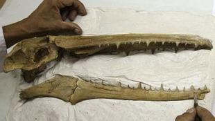 40 centis koponyát találtak Peruban!
