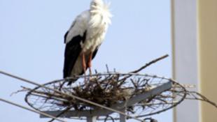 Itt a tavasz: megjött az első gólya