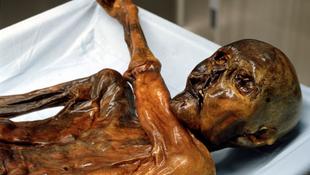 Negyvennyolc millió forintot fizetnek a múmia megtalálójának