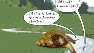 Másnapos csigák vedelnek Kapolcson