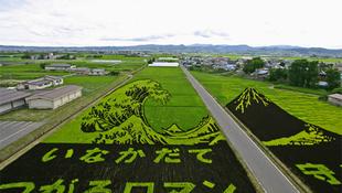 Mezőgazdasági táblaképek