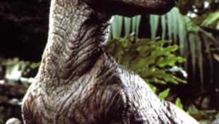 Nem is volt ragadozó a velociraptor?