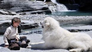 Megható kutya-gyerek történet a mozikban