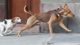Kutyákkal forgat Mundruczó Kornél