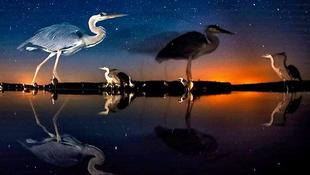 Magyar természetfotóst díjazott a BBC