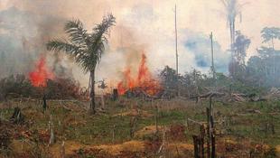 Két megyényi erdőt pusztítottak ki
