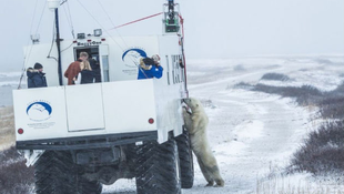 Jegesmedvék kerültek a Google Street View-ra