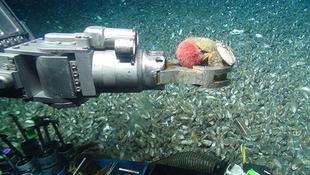 Új állatfajok az óceánban