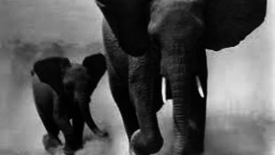 Méhkerítés az elefántok ellen