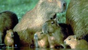 Szenzáció! Furcsa állat érkezett Budapestre
