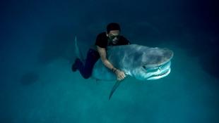 Gyilkos cápát lovagolt meg egy bátor modell