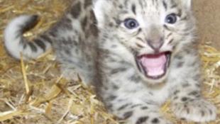 Éhen haltak az elűzött elnök állatkertjének lakói