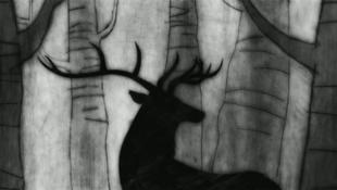 Mészárlás nyomaira bukkantak az erdei boszorkánytáborban