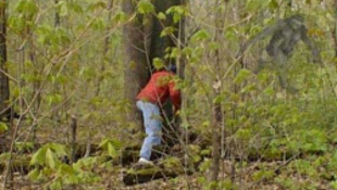 Misztikus lényt filmeztek le az erdőben