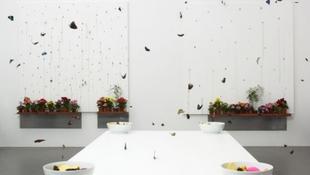 Pillangóholokauszt Damien Hirst legújabb őrülete kedvéért