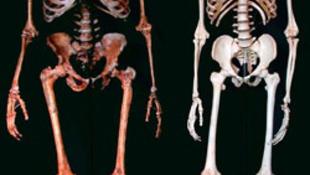 Ausztriában találkozott először a neandervölgyi és a homo sapiens