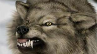Farkas támadta meg az ikerlányokat