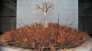 Újra teremnek Samu Géza fái