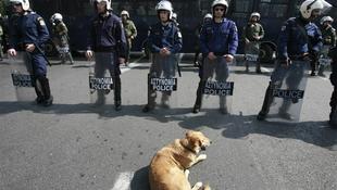 Egy kutyus a görögországi tüntetések hőse