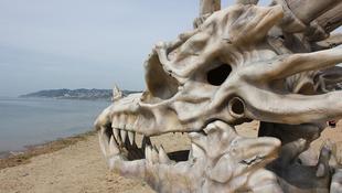 Sárkánykoponya tűnt fel a parton