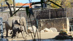 Egy éves a kiselefánt