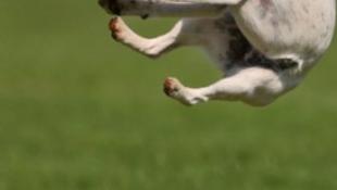 Kutyákkal frizbiznek Mogyoródon