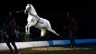 Újra bejönnek a lovak Budapestre