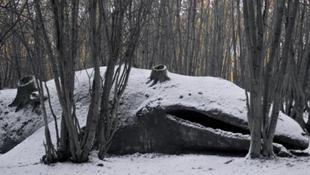 Tengeri óriást találtak az erdőben