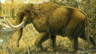 Őskori vad maradványai rejtőztek a mocsárban