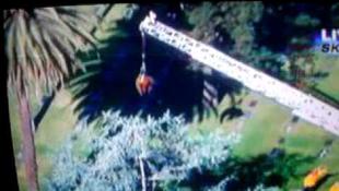 Tűzoltók mentették meg a fán ragadt medvét-videóval