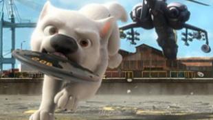 Reptéren gázolták halálra Travolta kutyáit