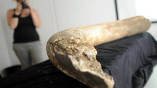 Tízezer éves őslény maradványaira bukkantak