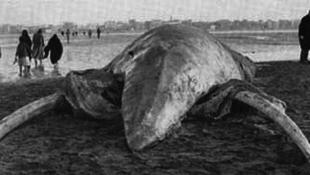 Gigantikus bizarr lényt vetett partra a víz