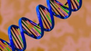 Megéneklik a genetikai kódot