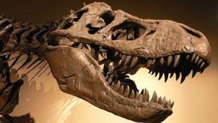 Dinoszauruszok lakta város került fel a térképre