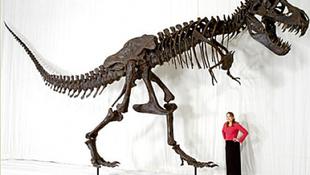 A világ legcsinosabb dinoszauruszlánya