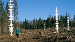 Kipusztították a legősibb európai erdőt
