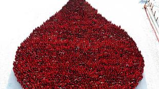 A világ legnagyobb vércseppje