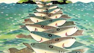 Cápák mentették meg a nyuszit