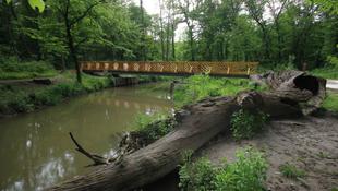 Muzsika a Királyi Erdőben