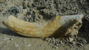 Százezer éves leletre bukkantak Szegeden